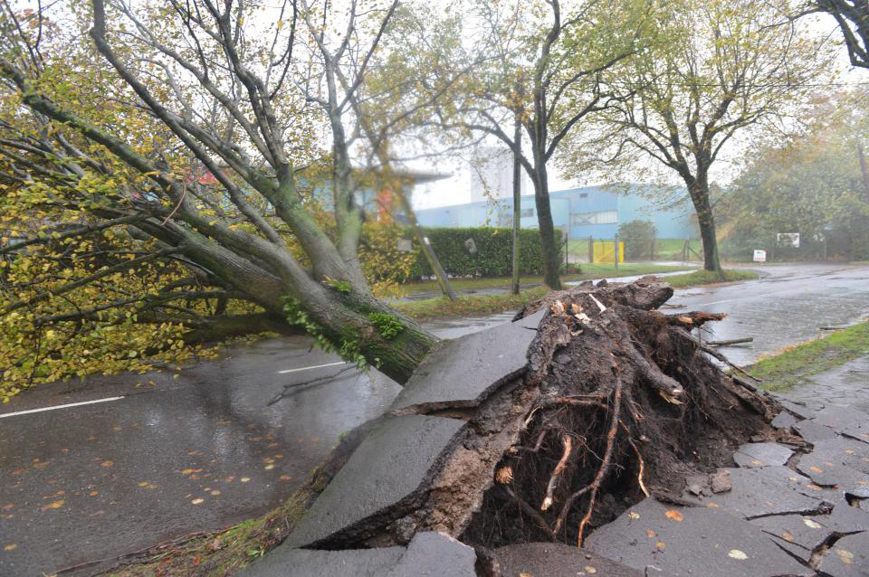 SecureFix Direct - Damage And Disruption As Trees Are Ripped Out Of The Ground.